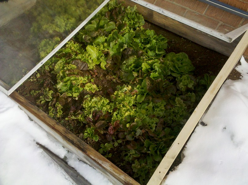 Use Cold Frames to extend your season